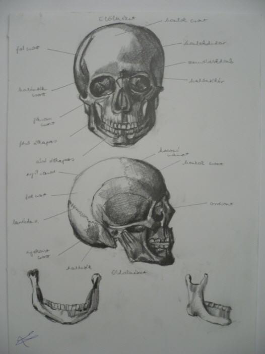 skull study by Silmarilian