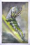 #526 - Dragon Headed Caterpillar Study