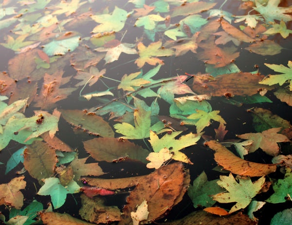 Leaves of Water by CheBertrand