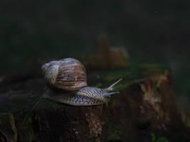 Snail 06.22.2018 by Jester-Genso