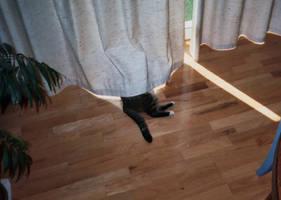 Cat Butt by Jarndahusky