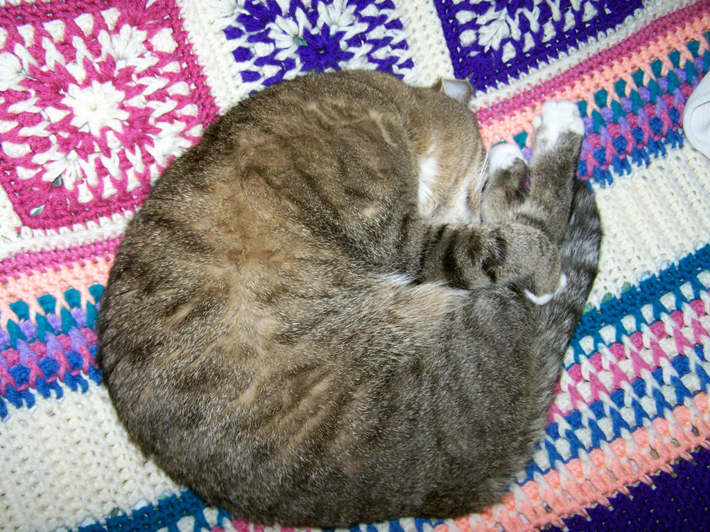 Curled up furball by Jarndahusky