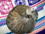 Curled up furball