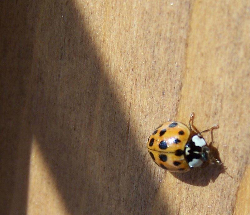 Ladybug Crawl by Jarndahusky