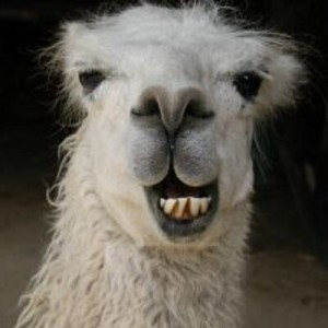 llama-finder's Profile Picture