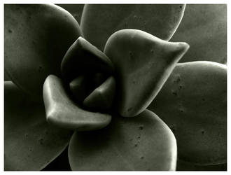 cactus by francescagalea