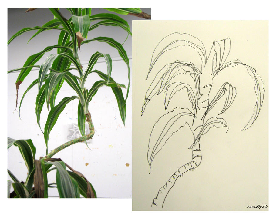 Line drawing plants : Plant contour drawing compare by xenaquill on deviantart