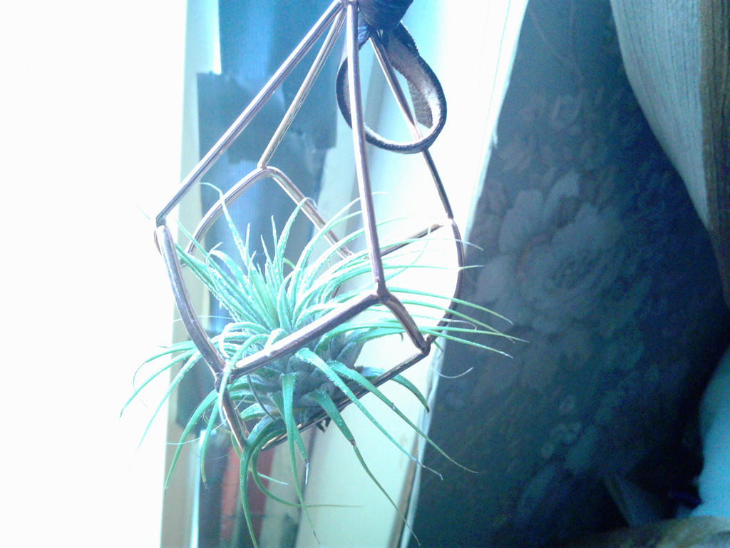My Majestic Air Plant by DespairGriffin