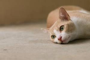 Cat 50 by eselite