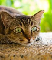 Cat 63 by eselite
