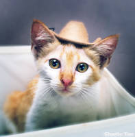 Cat 84 by eselite