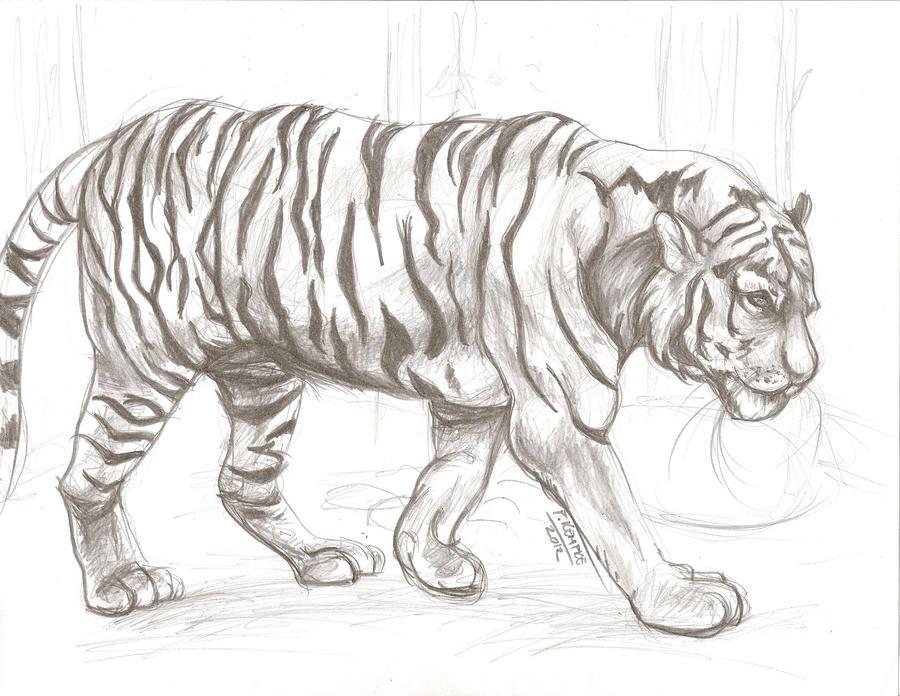 Animal Drawing 1 by shamash on DeviantArt