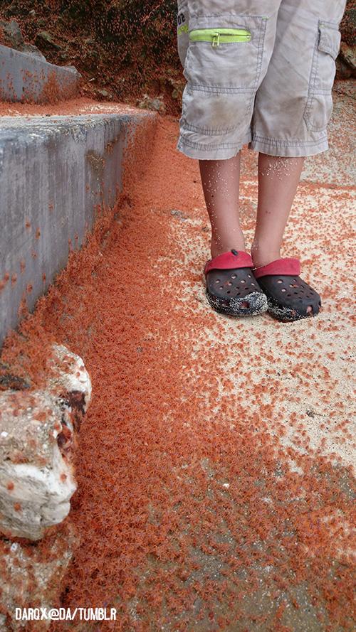 Comparison of crabs near nephew 2's feet