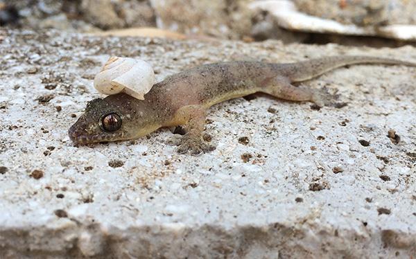 Gecko by Darqx