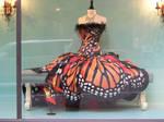 robe papillion