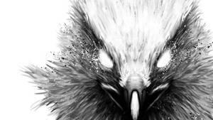 The Hawk Wallpaper 1920x1080