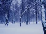 Winter in Wonderland