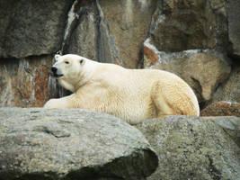 Ice Bear I by 5nw