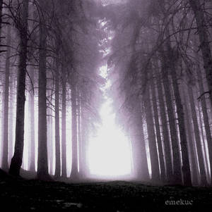 karanligin son nefesi