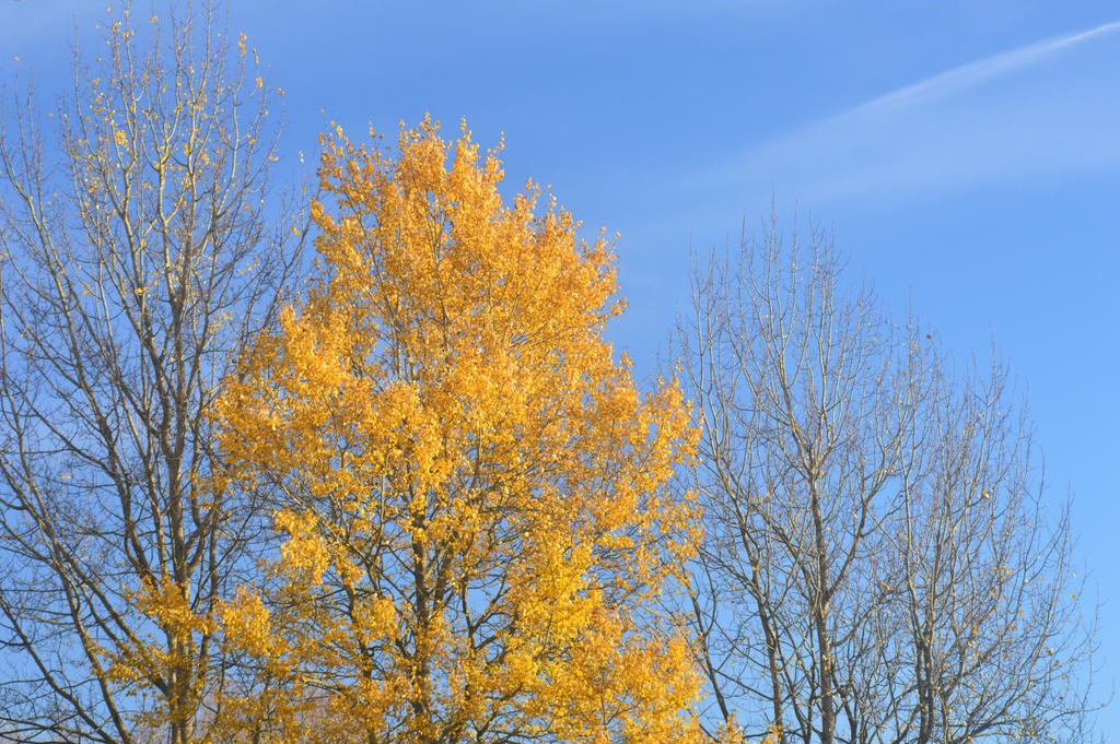 Autumn Colours by Just--Saying