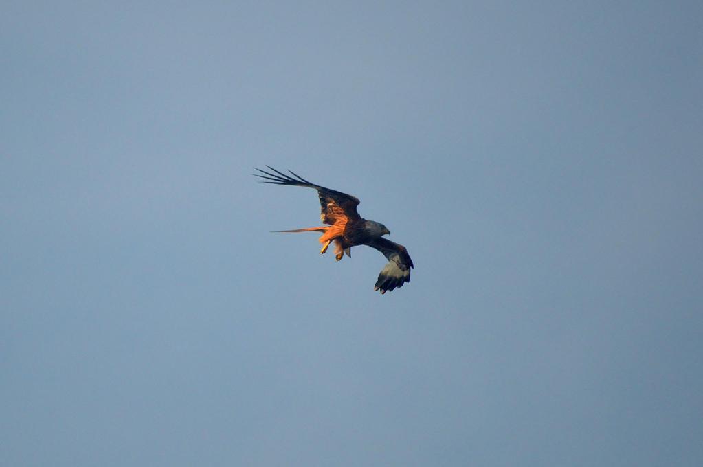 Turning Kite by Just--Saying