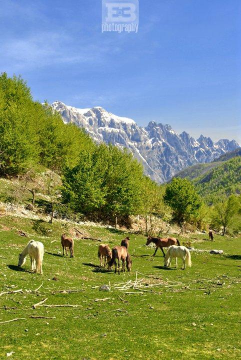 Valbona Valley by archedi