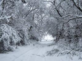 Winter by OlgaCherkasova