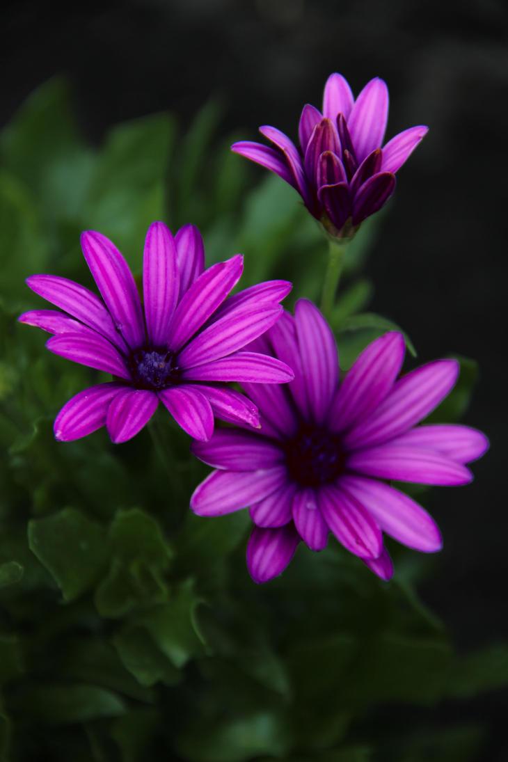 Lilac flowers by OlgaCherkasova