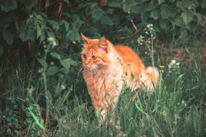 The red hunter1 by OlgaCherkasova