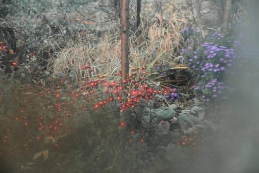 Morning.Autumn nature. Sight through the window.