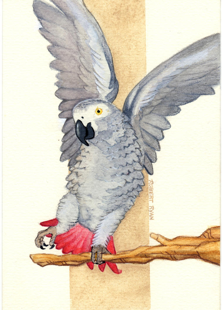 Congo African Grey Watercolor Pin Up by RobertDanielRyan