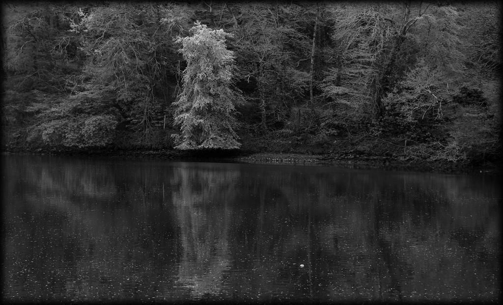 arbre gris by pwlldu