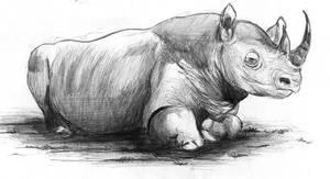 Rinoceronte by waltertierno