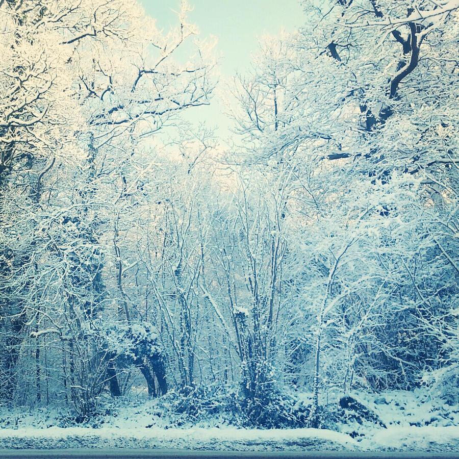 Winter Wonderland.001 by shelleyytamaraa