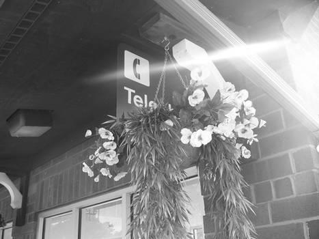Sign Behind a Flower
