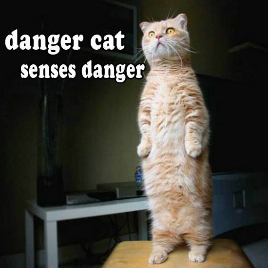 danger cat by doom1272 on DeviantArt