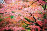 Autumn is an artist II