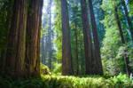 Forest of wisdom