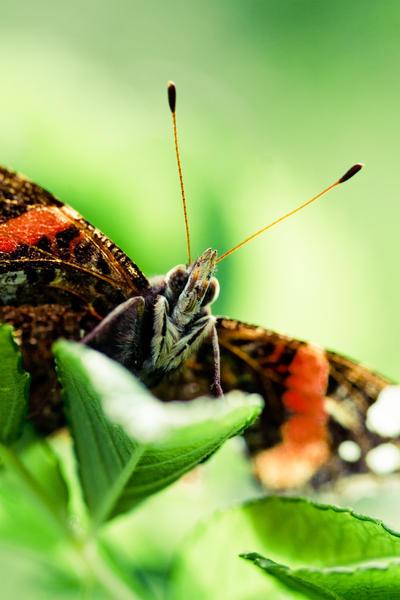 Butterfly by MiniMonkey