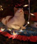[Photo] New Years Cat (1/3)