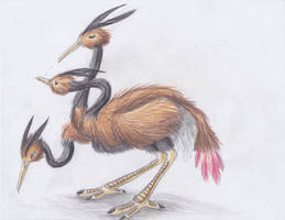 December 3rd 2012: Dodrio by UltimateSassMaster