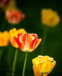 flowers in spring by bjoernst