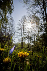 Flowers in Spring 2012 by bjoernst