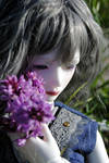 a flower to dream