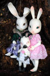 portrait of a bunny family