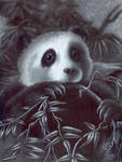 Panda by crazyanthrowolf