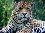 Jaguar Two