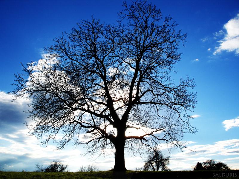 Tree of Truth by balduris