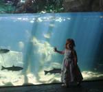 Vivi and the Fish