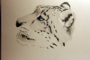Snow Leopard by youthinkimspecial